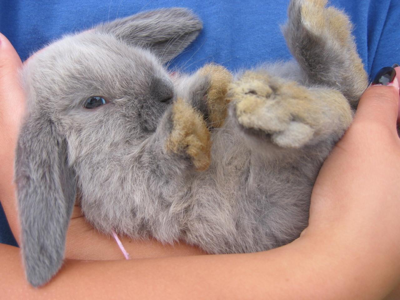 2008, 11-24 Daily Bunny.2