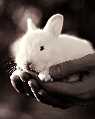 2008, 11-29 Daily Bunny
