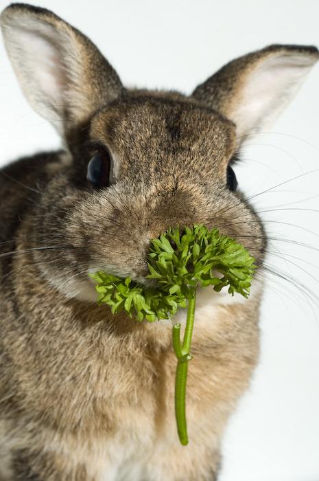 2008, 12-8 Daily Bunny