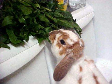 2008, 12-15 Daily Bunny 2