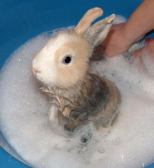 2008, 12-26 Daily Bunny