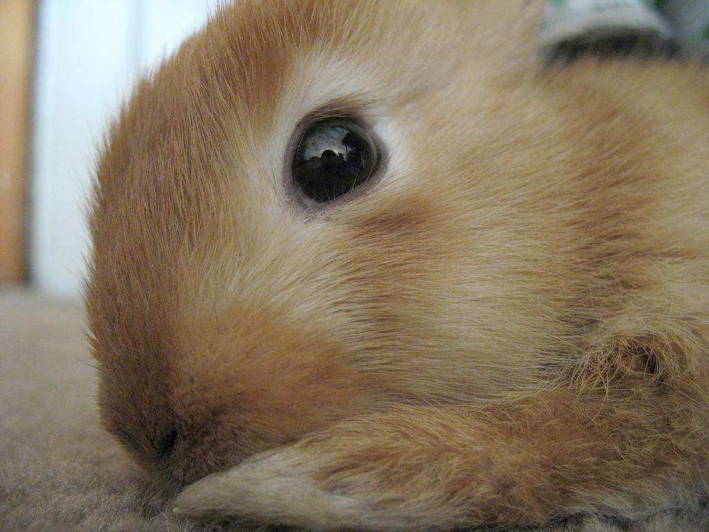 2008, 12-27 Daily Bunny