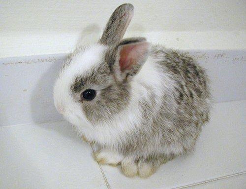 2008, 12-30 Daily Bunny