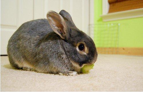 2009, 1-4 Daily Bunny