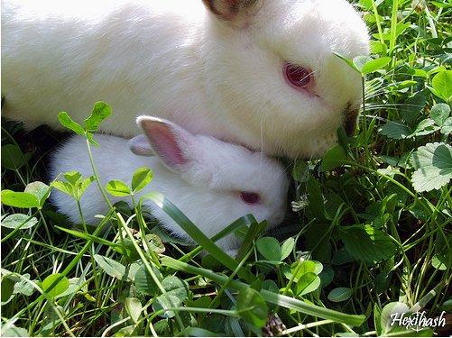 2009, 1-12 Daily Bunny