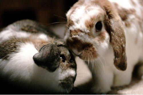 2009, 1-14 Daily Bunny