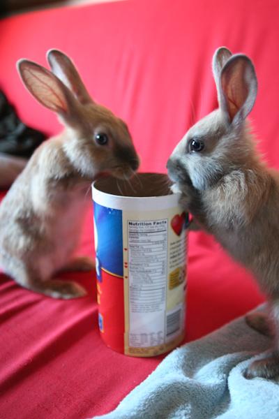 2009, 2-28 Daily Bunny