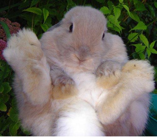2009, 3-1 Daily Bunny