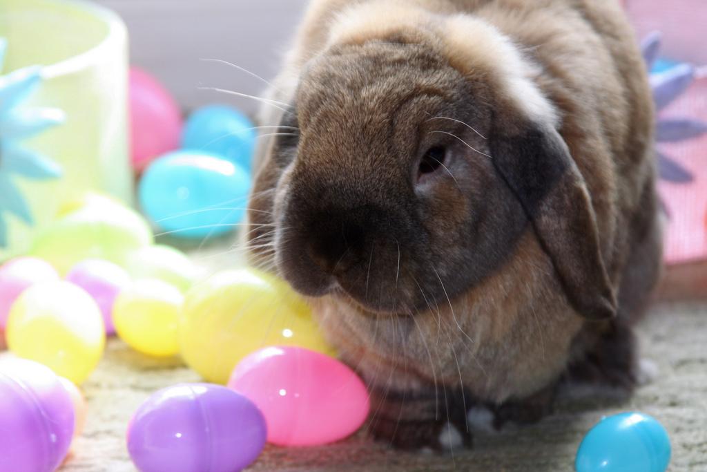 2009, 4-12 Daily Bunny.1