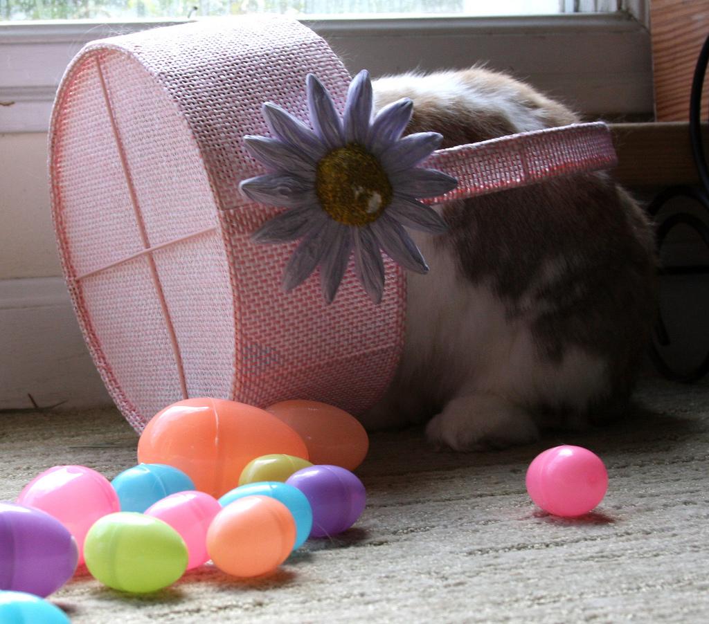 2009, 4-12 Daily Bunny.2