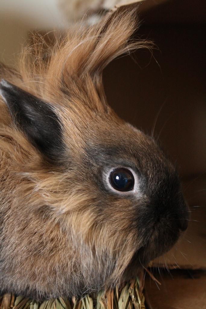 2009, 4-20 Daily Bunny