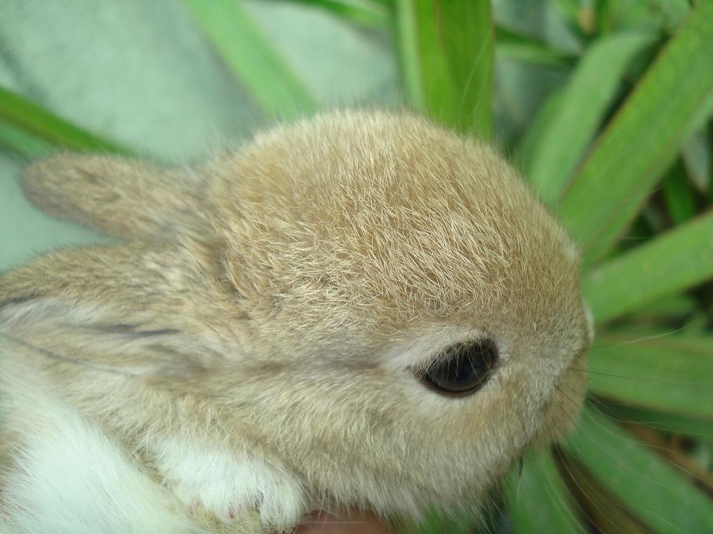 2009, 4-23 Daily Bunny