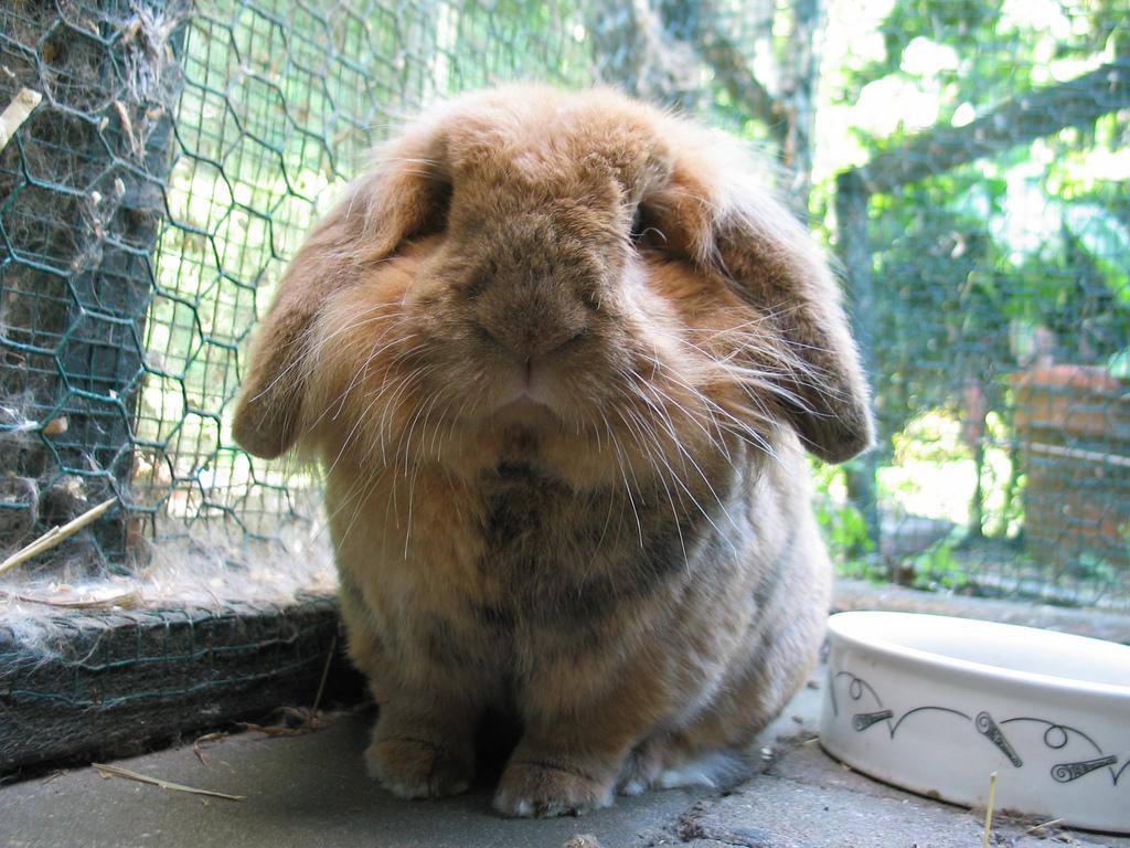 2009, 4-24 Daily Bunny