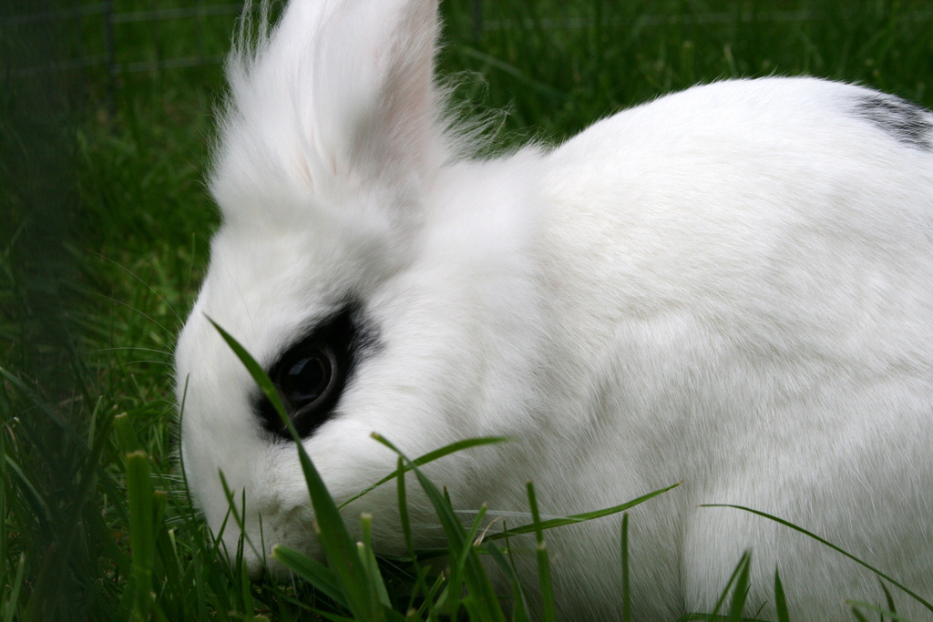 2009, 4-25 Daily Bunny