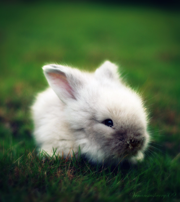 2009, 4-30 Daily Bunny
