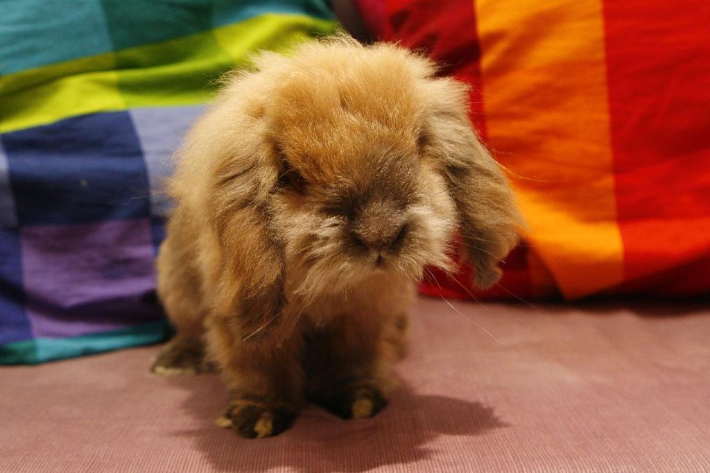 2009, 5-15 Daily Bunny.2