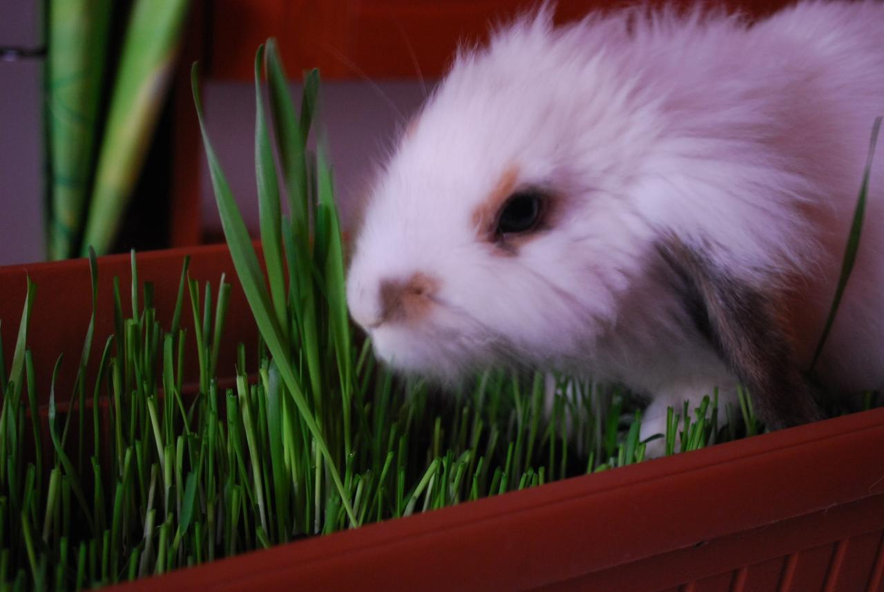 2009, 5-25 Daily Bunny