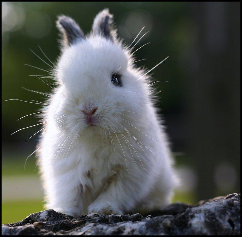 2009, 5-26 Daily Bunny