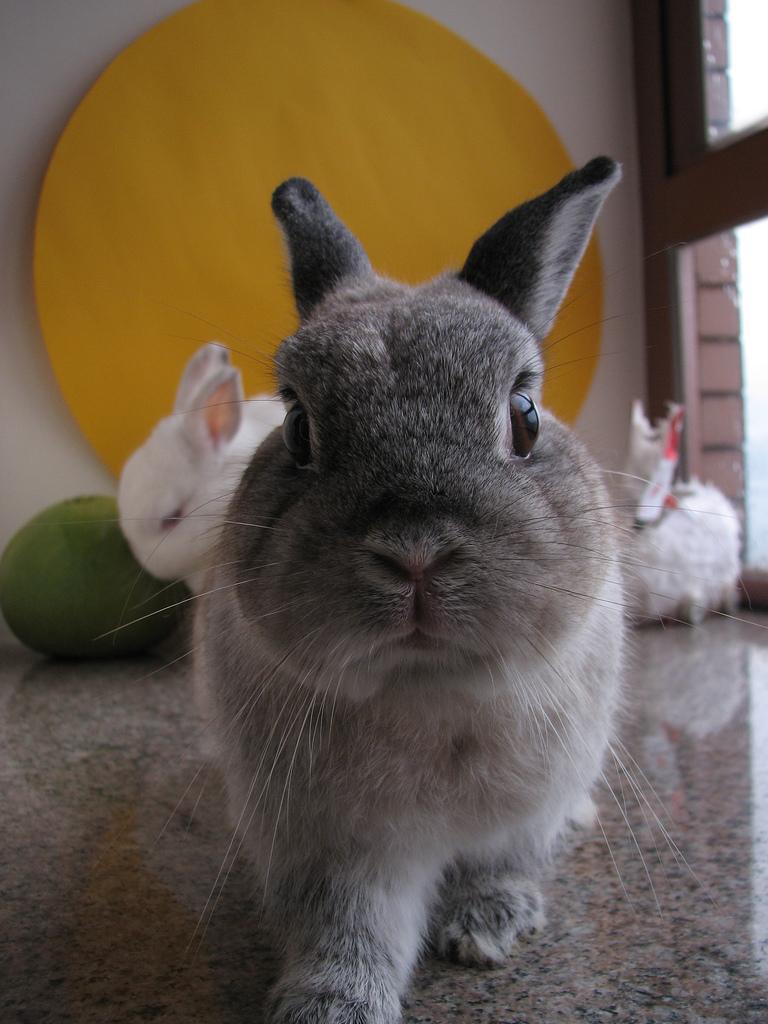 2009, 6-27 Daily Bunny