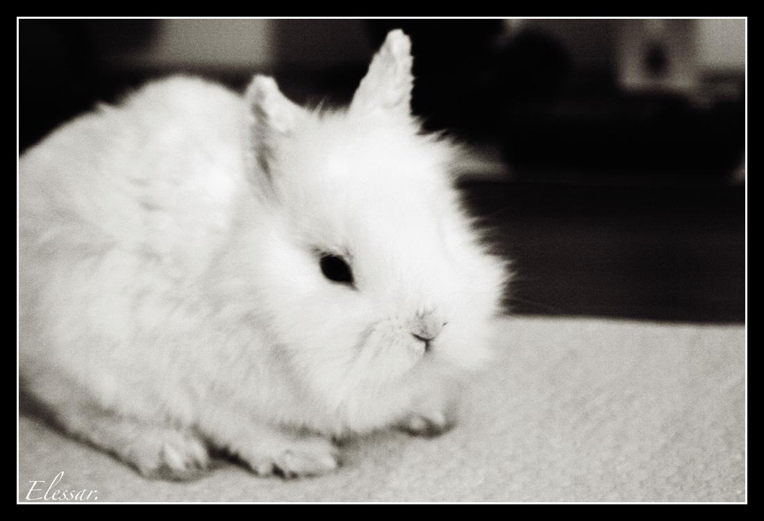 2009, 6-30 Daily Bunny