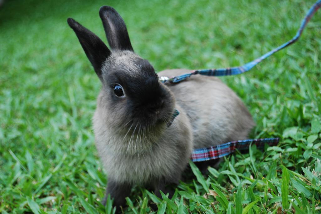 2009, 7-7 Daily Bunny