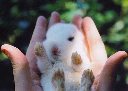 2009, 7-1 Daily Bunny