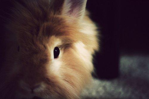 2009, 7-28 Daily Bunny