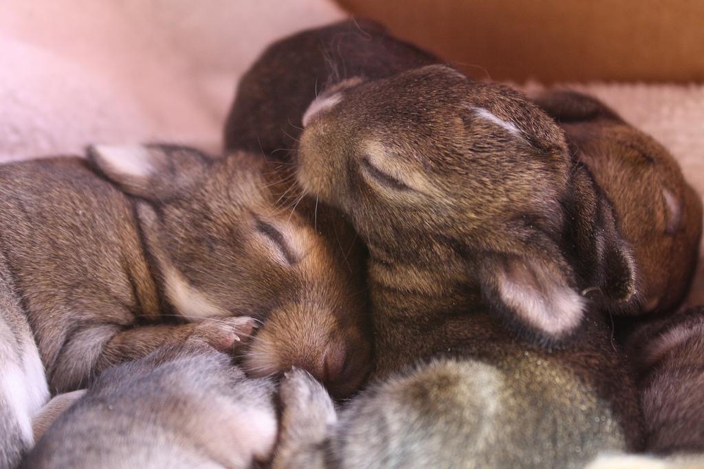 2009, 8-18 Daily Bunny