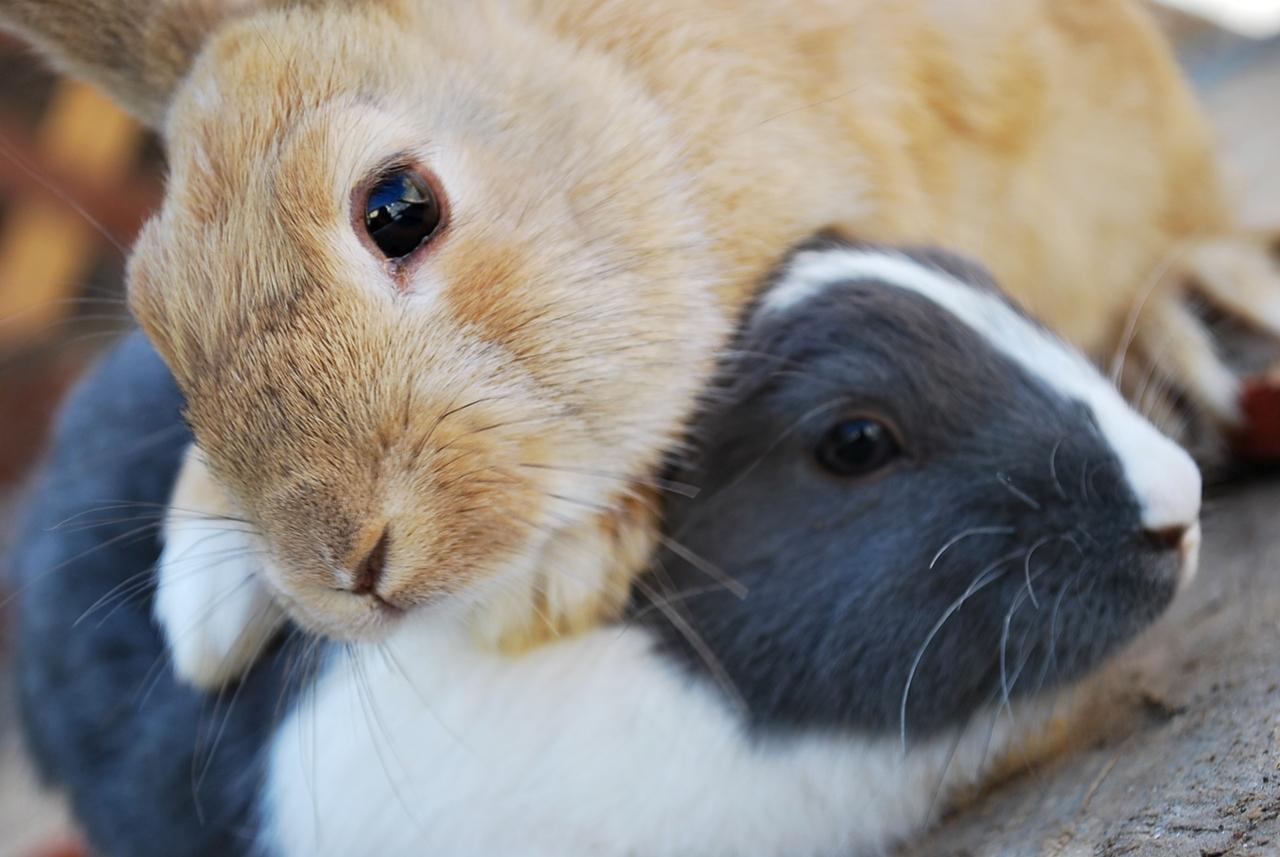 2009, 8-19 Daily Bunny