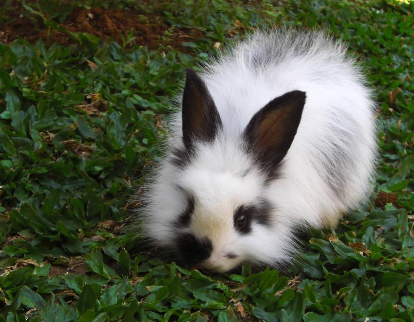 2009, 8-23 Daily Bunny