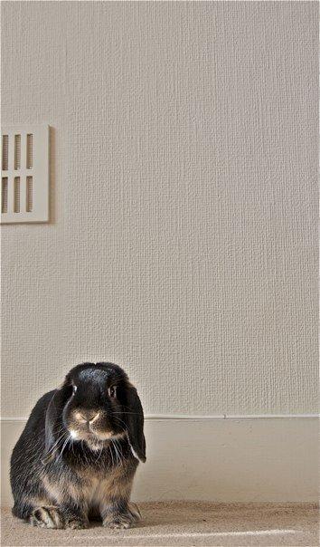 2009, 8-24 Daily Bunny