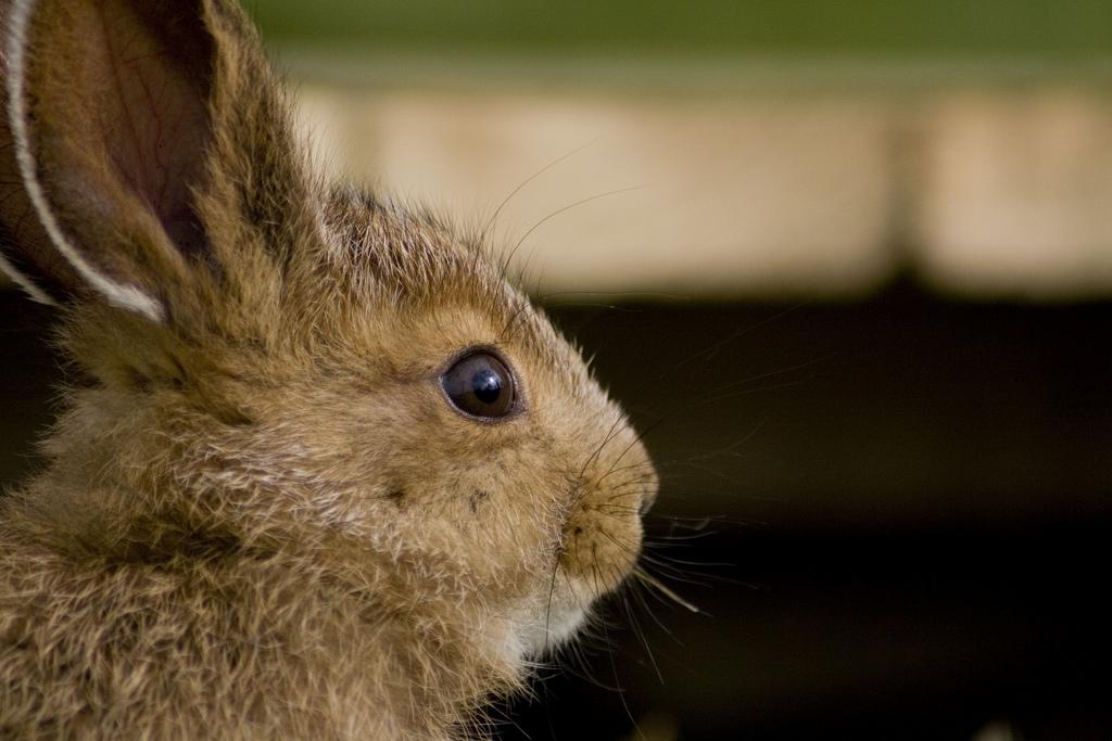 2009, 8-29 Daily Bunny