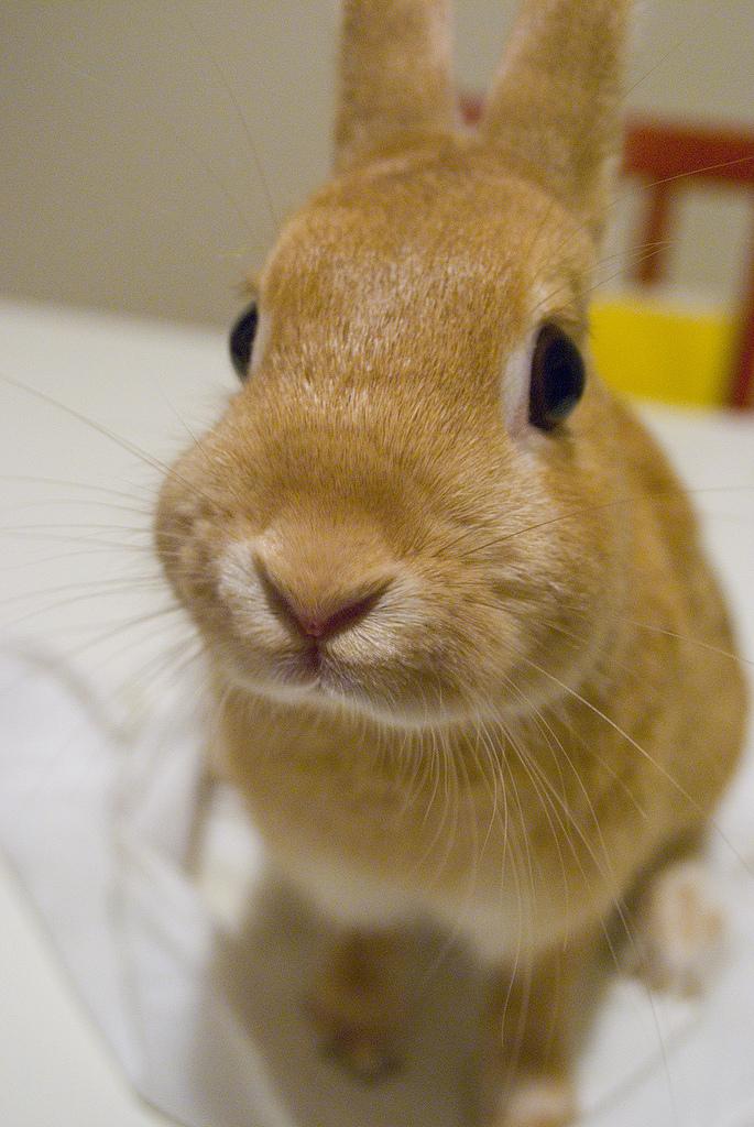2009, 9-1 Daily Bunny