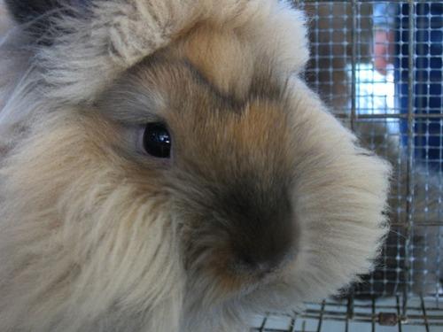 2009, 9-24 Daily Bunny
