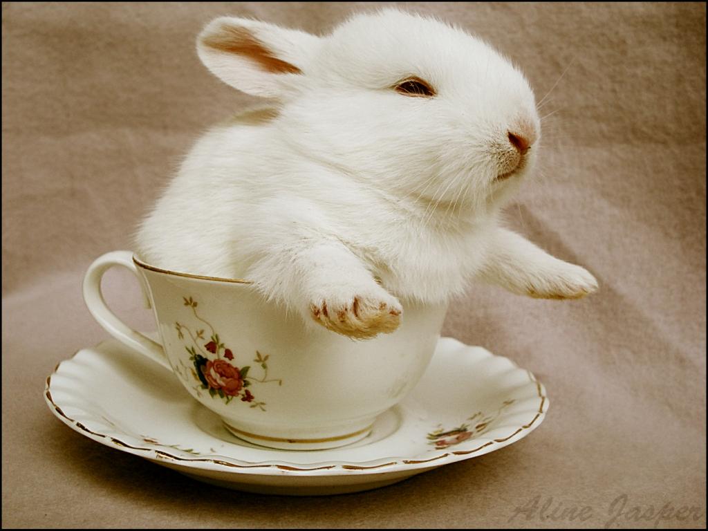 2009, 9-27 Daily Bunny