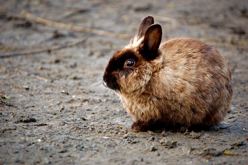 2009, 10-22 Daily Bunny