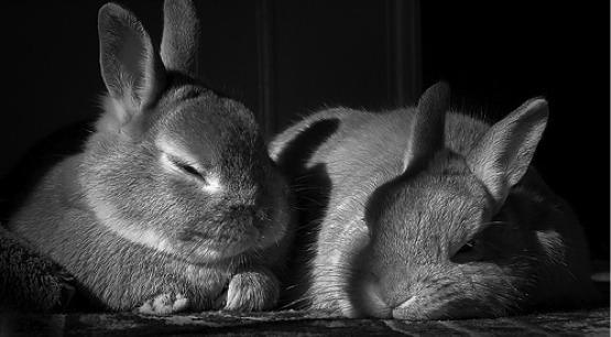 2009, 10-25 Daily Bunny