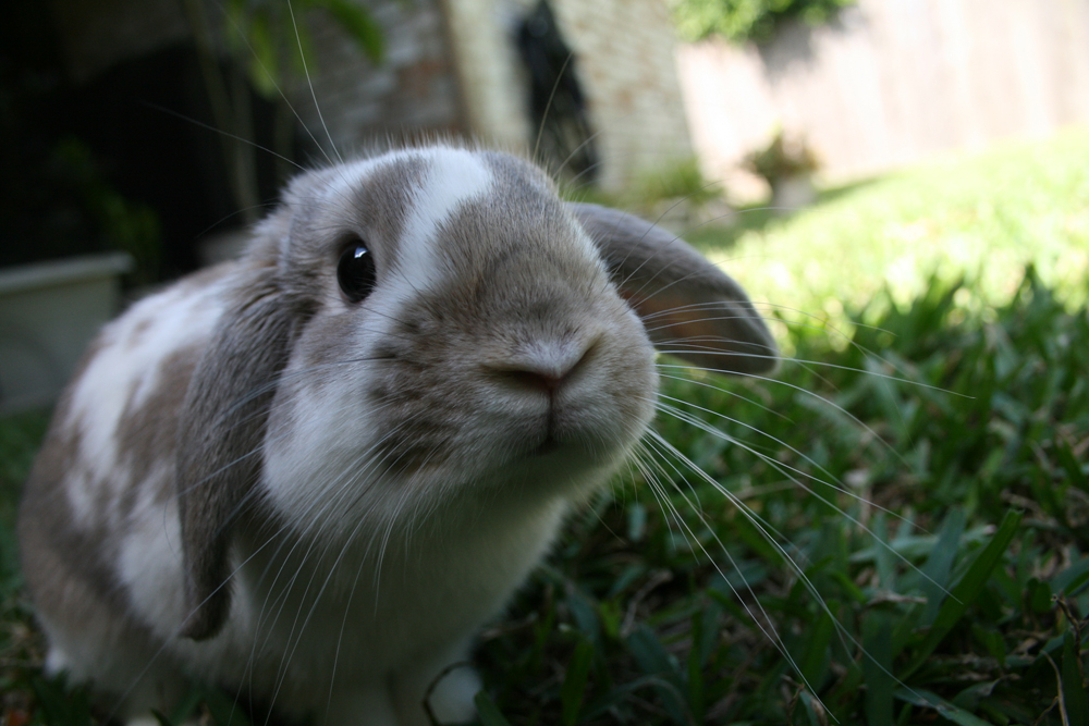 2009, 10-27 Daily Bunny