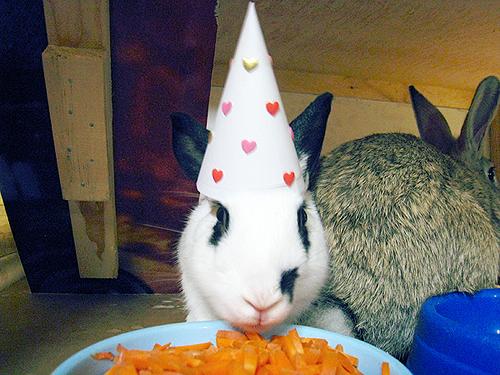 2009, 11-2 Daily Bunny