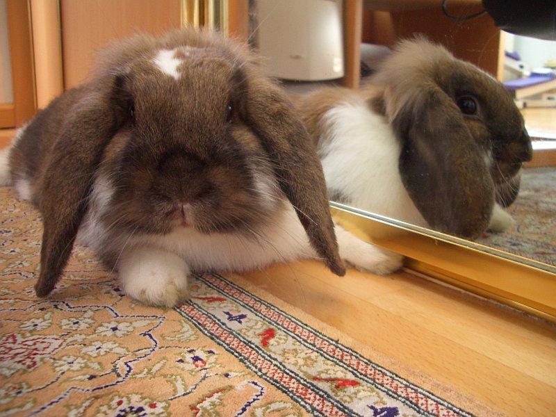 2009, 11-3 Daily Bunny