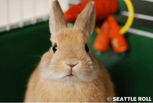 2009, 11-7 Daily Bunny