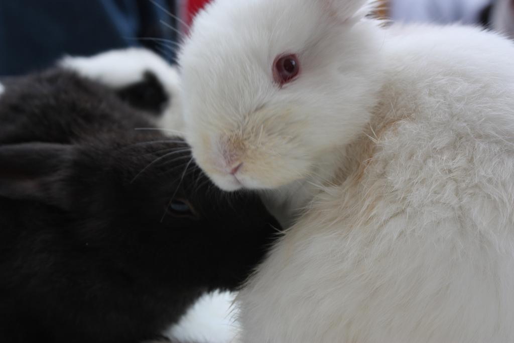 2009, 11-9 Daily Bunny