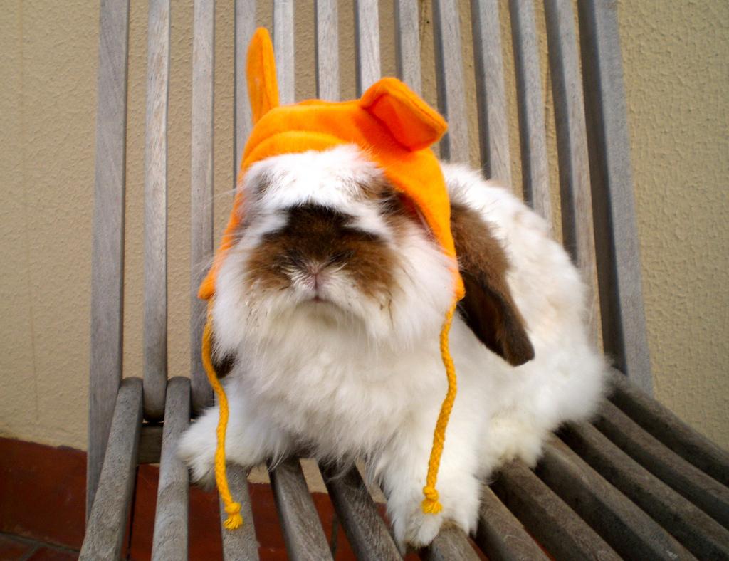 2009, 11-18 Daily Bunny