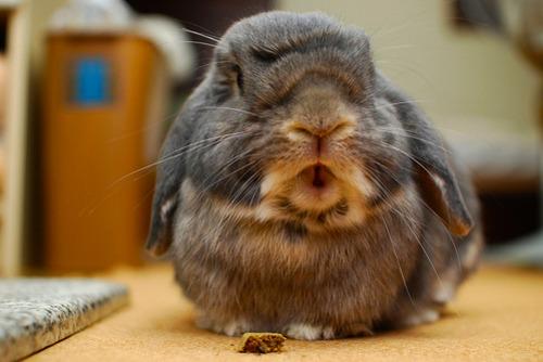 2009, 11-22 Daily Bunny