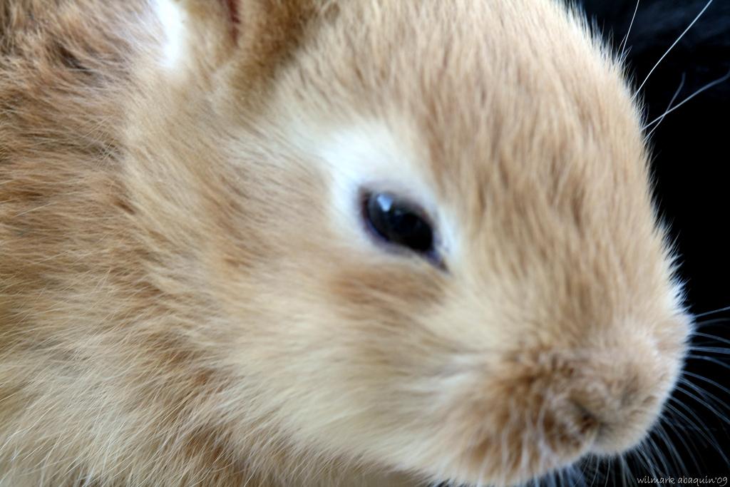 2009, 11-24 Daily Bunny