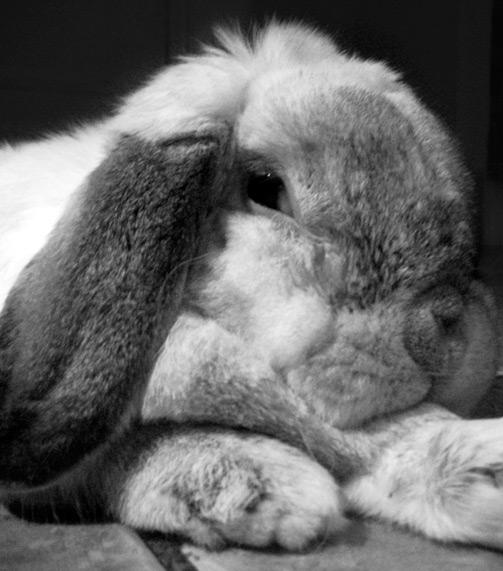 2009, 11-25 Daily Bunny