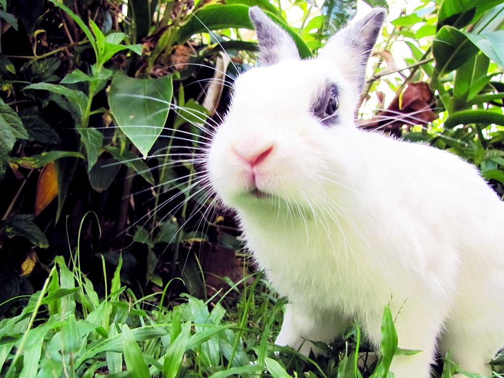 2009, 11-26 Daily Bunny
