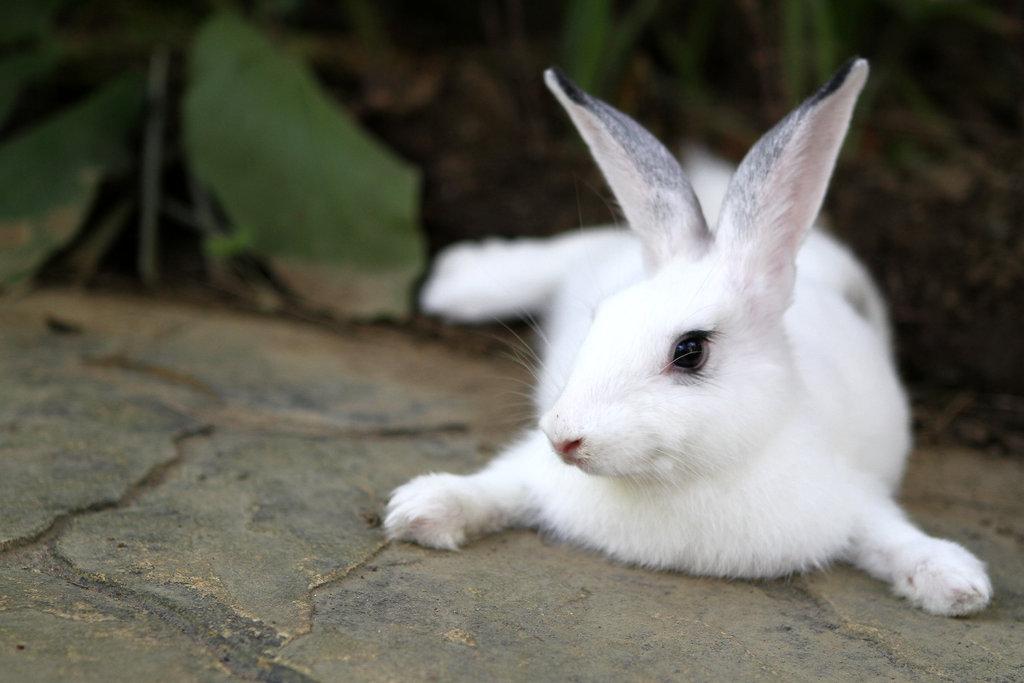 2009, 12-2 Daily Bunny