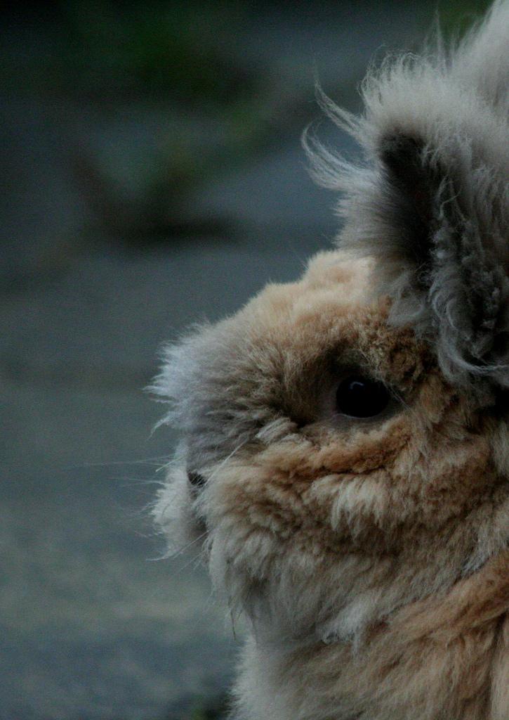 2009, 12-3 Daily Bunny