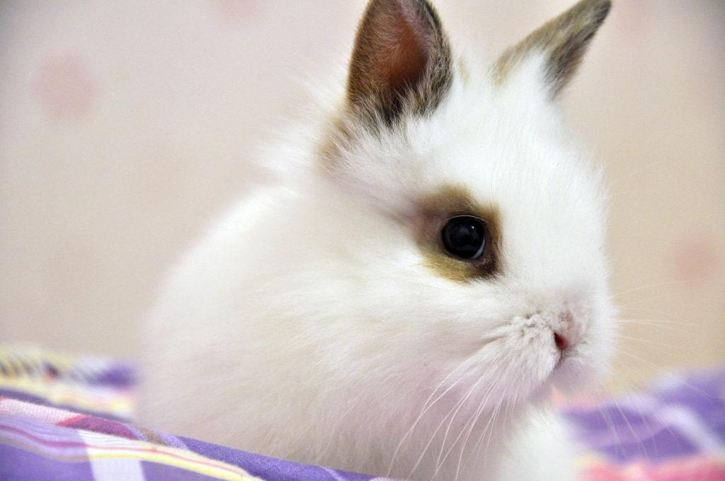 2009, 12-7 Daily Bunny